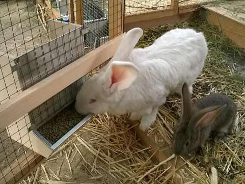 Бункерная кормушки для кроликов своими руками фото чертежи