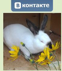 Мой кролик группа вконтакте